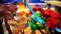 Что может быть опаснее краба с ножом? Банда крабов с мечами и топорами в Fight Crab